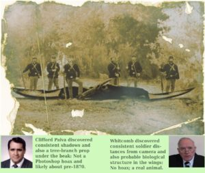 evidences the Ptp photograph is genuine, with a modern pterosaur